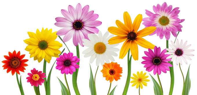 image free download Spring Transparent