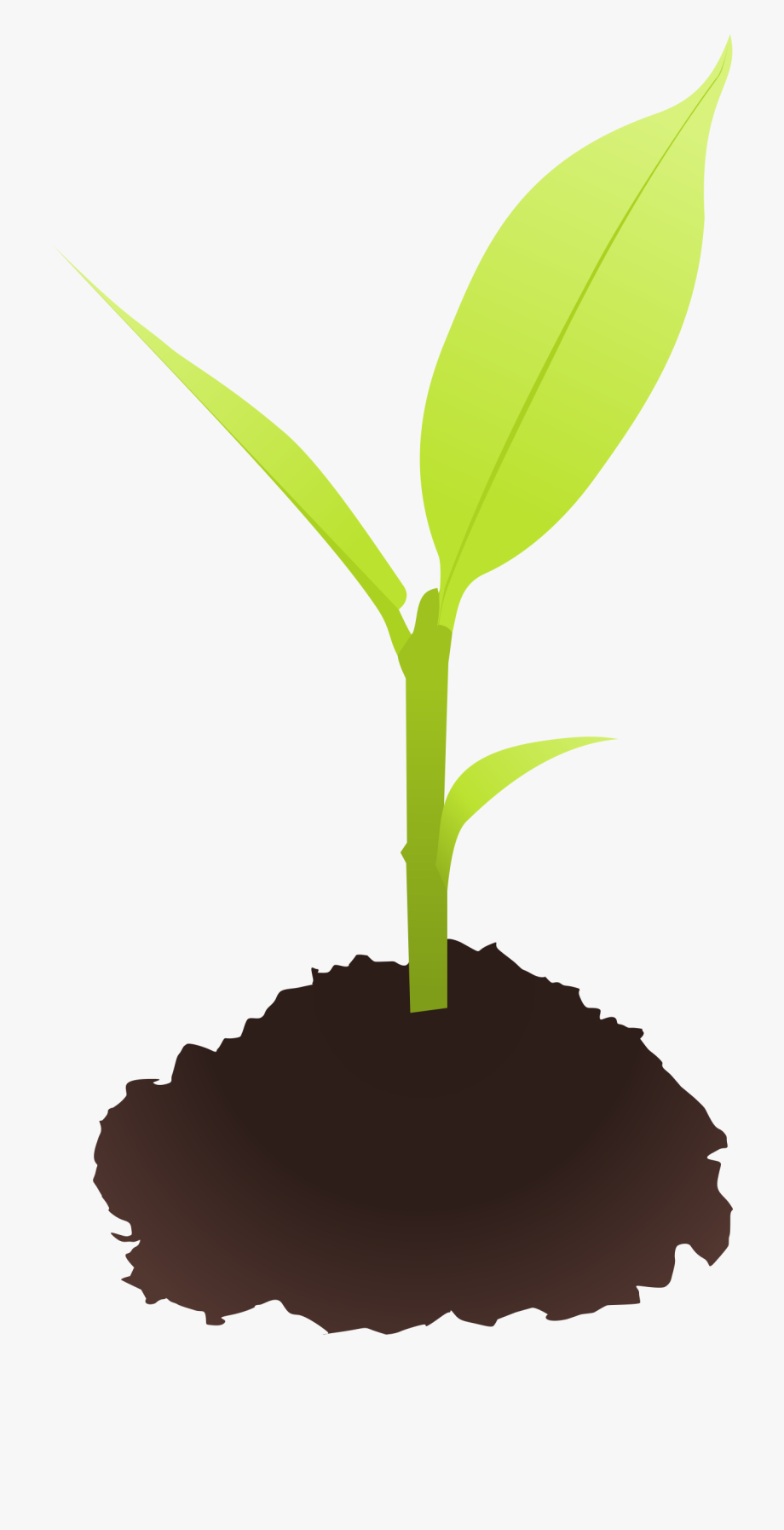 banner freeuse download Seed small plant free. Sprout clipart