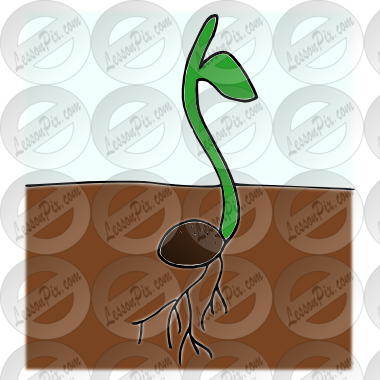 graphic royalty free stock Sprout clipart. Picture for classroom therapy