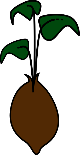 png free Seed Sprout Green Clip Art at Clker