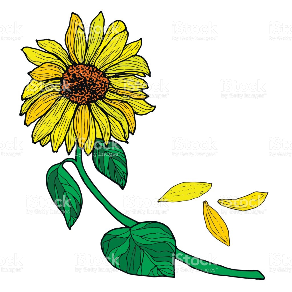 picture library Sprout clipart sunflower stem. Images gallery for free