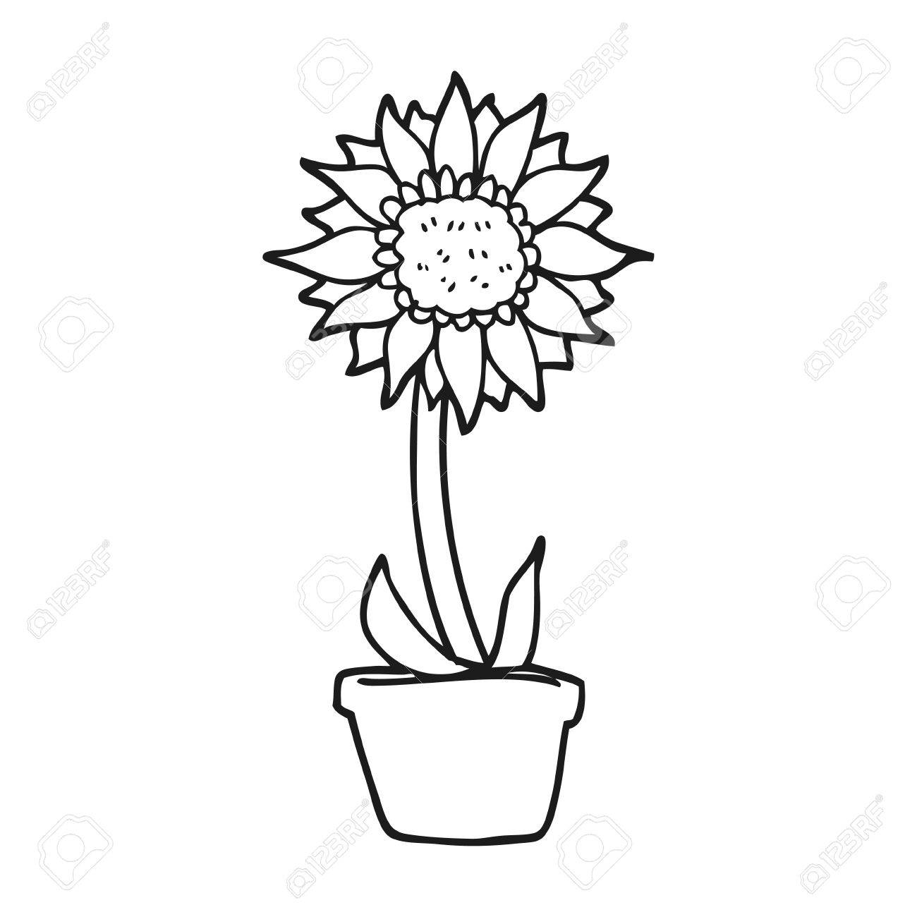 clip art transparent library Line drawing free download. Sprout clipart sunflower stem