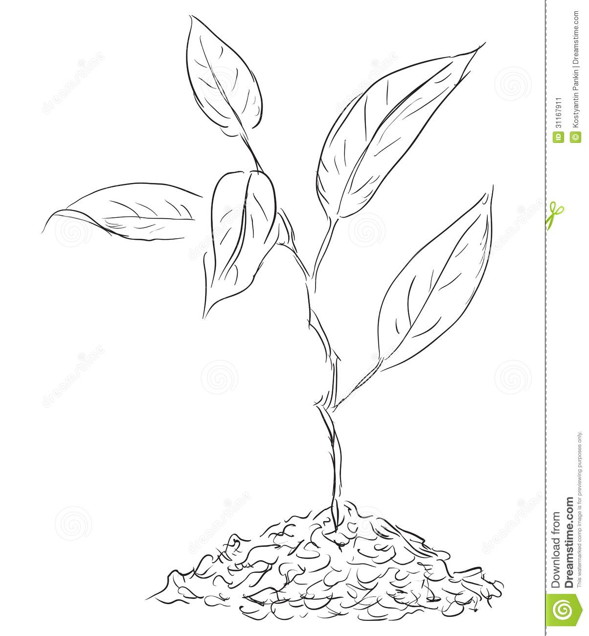 image Sprout drawing. Plant google search paddle