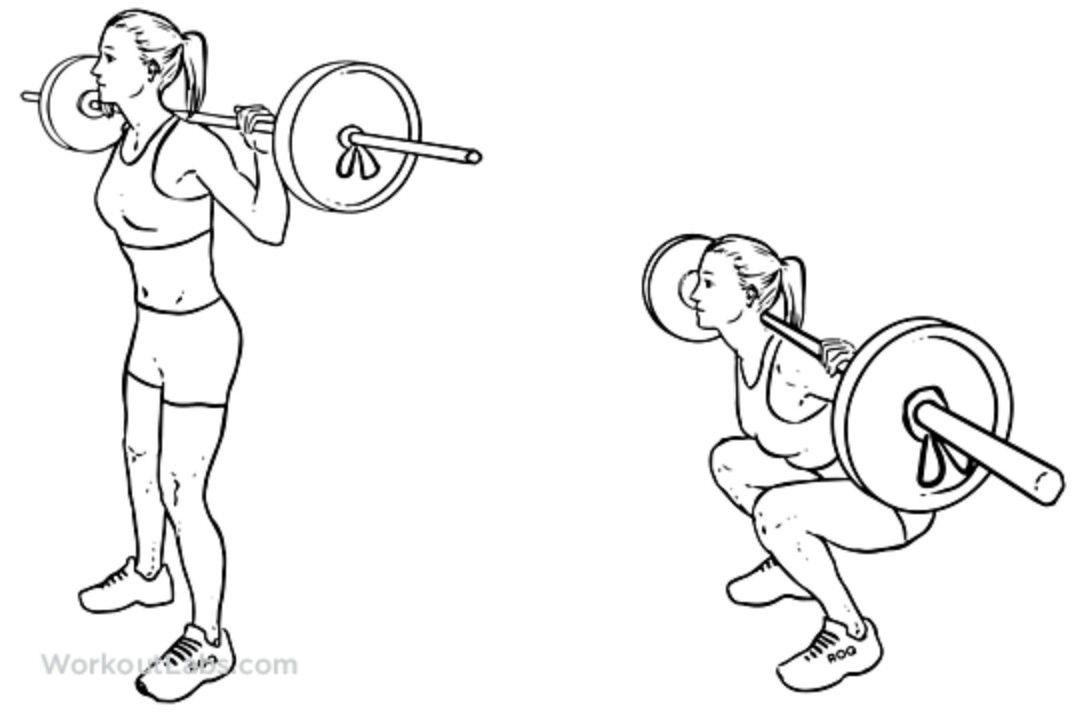 clip art transparent stock Barbell squat