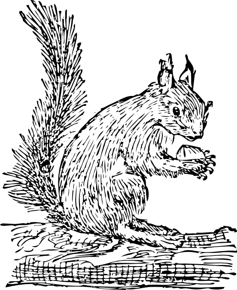 clip art royalty free stock Squirrel Clip Art at Clker