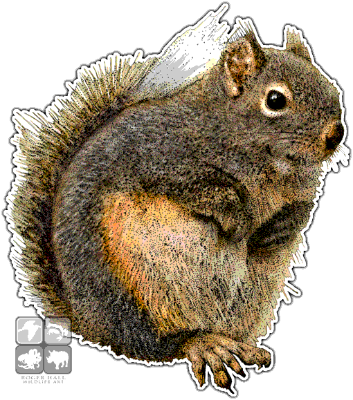 graphic transparent download Douglas Squirrel