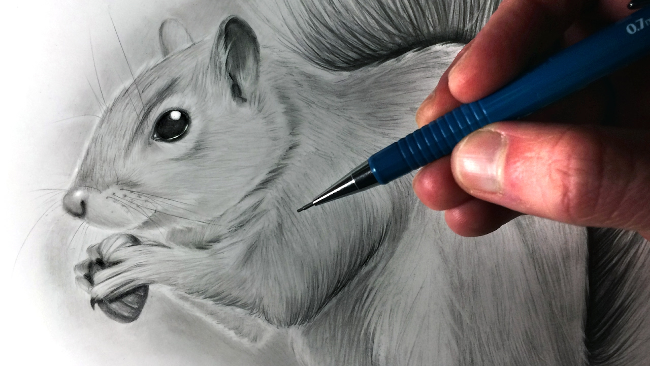 clipart free library How to Draw a Squirrel