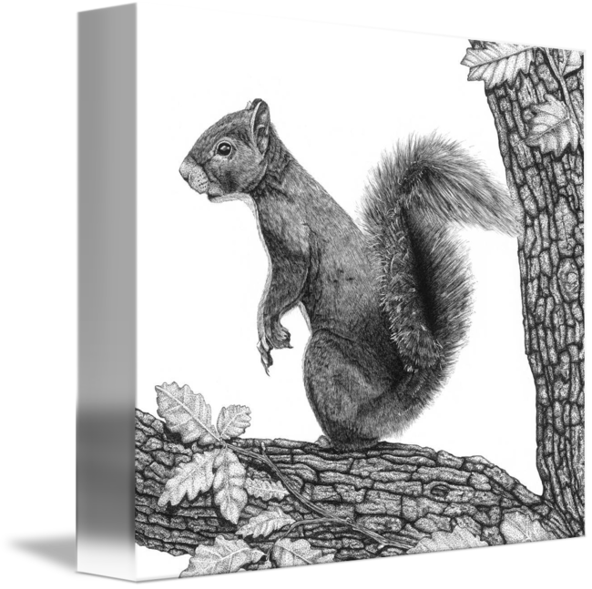 image black and white Mr Squirrel