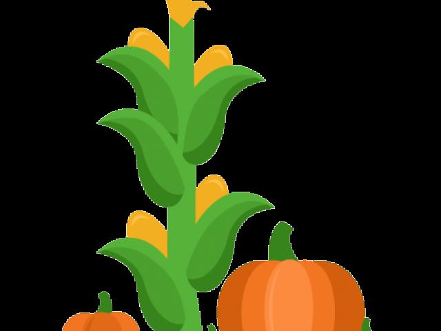 clip art royalty free download Corn Stalk Clipart
