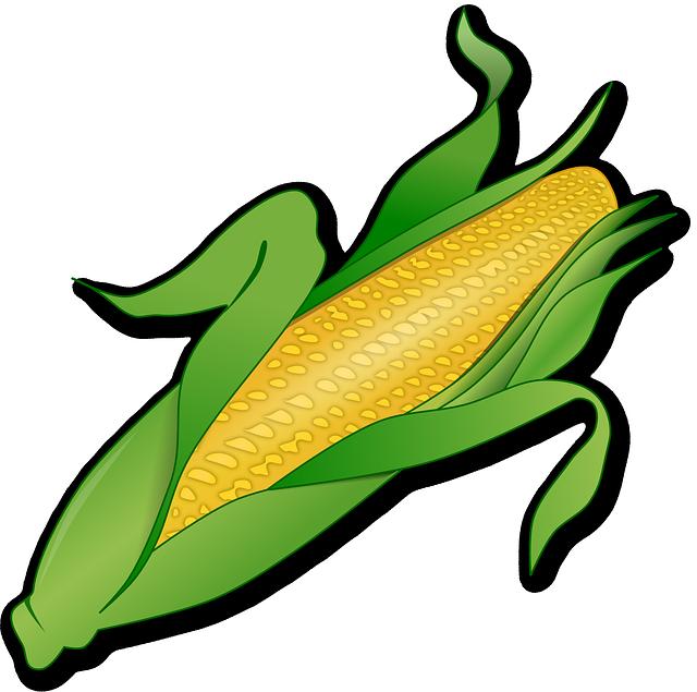 clip transparent stock plantation drawing corn #115074063