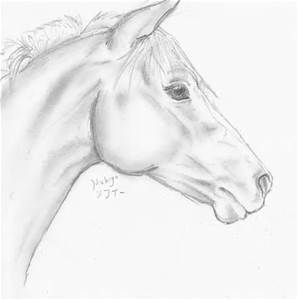clipart royalty free download Pencil Drawings of Horses Heads