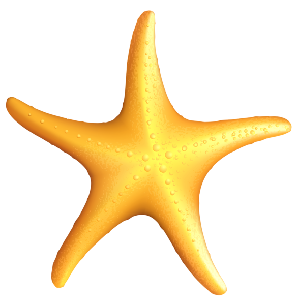banner black and white Starfish clipart. Frames illustrations hd images.