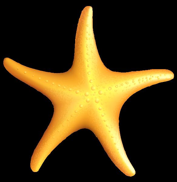 jpg free download Starfish clipart