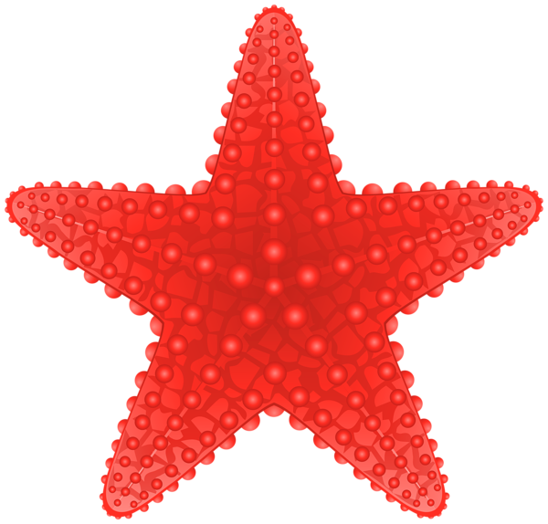 freeuse stock Starfish clipart. Transparent png clip art.