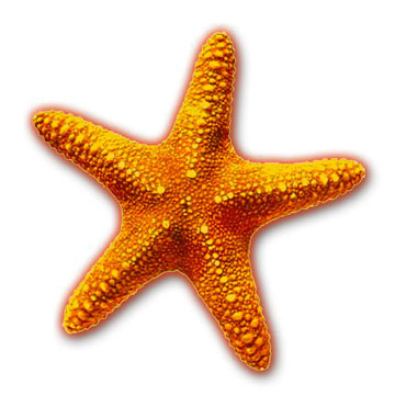 picture transparent library Free cliparts download clip. Starfish clipart.