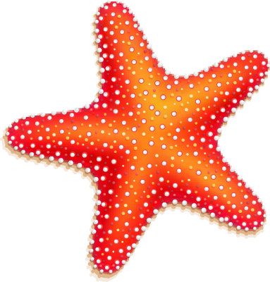freeuse Frames illustrations hd images. Starfish clipart.