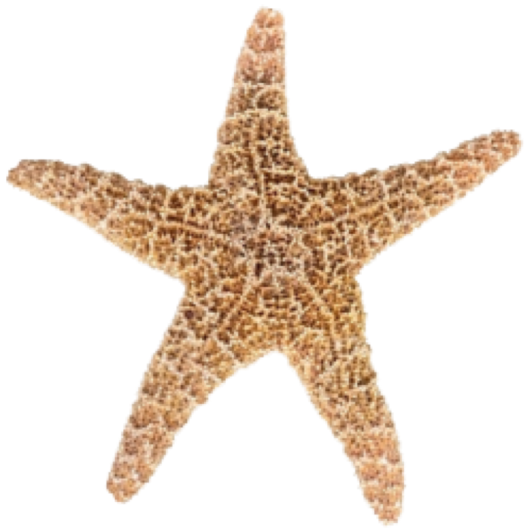 banner freeuse library Png pictures free icons. Starfish transparent.