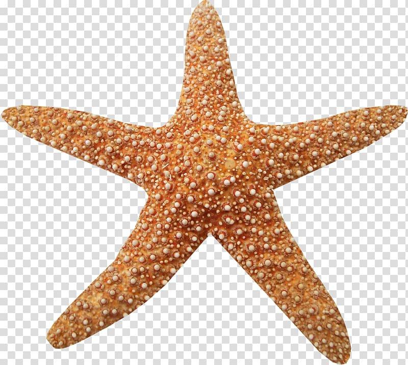 clip art black and white Starfish transparent aquatic animal. Marine animals brown texture.