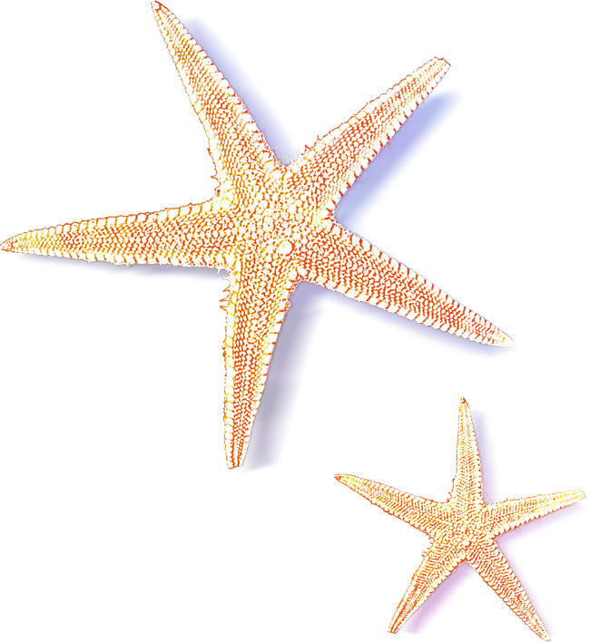 jpg library library Sea star images png. Starfish transparent aquatic animal.