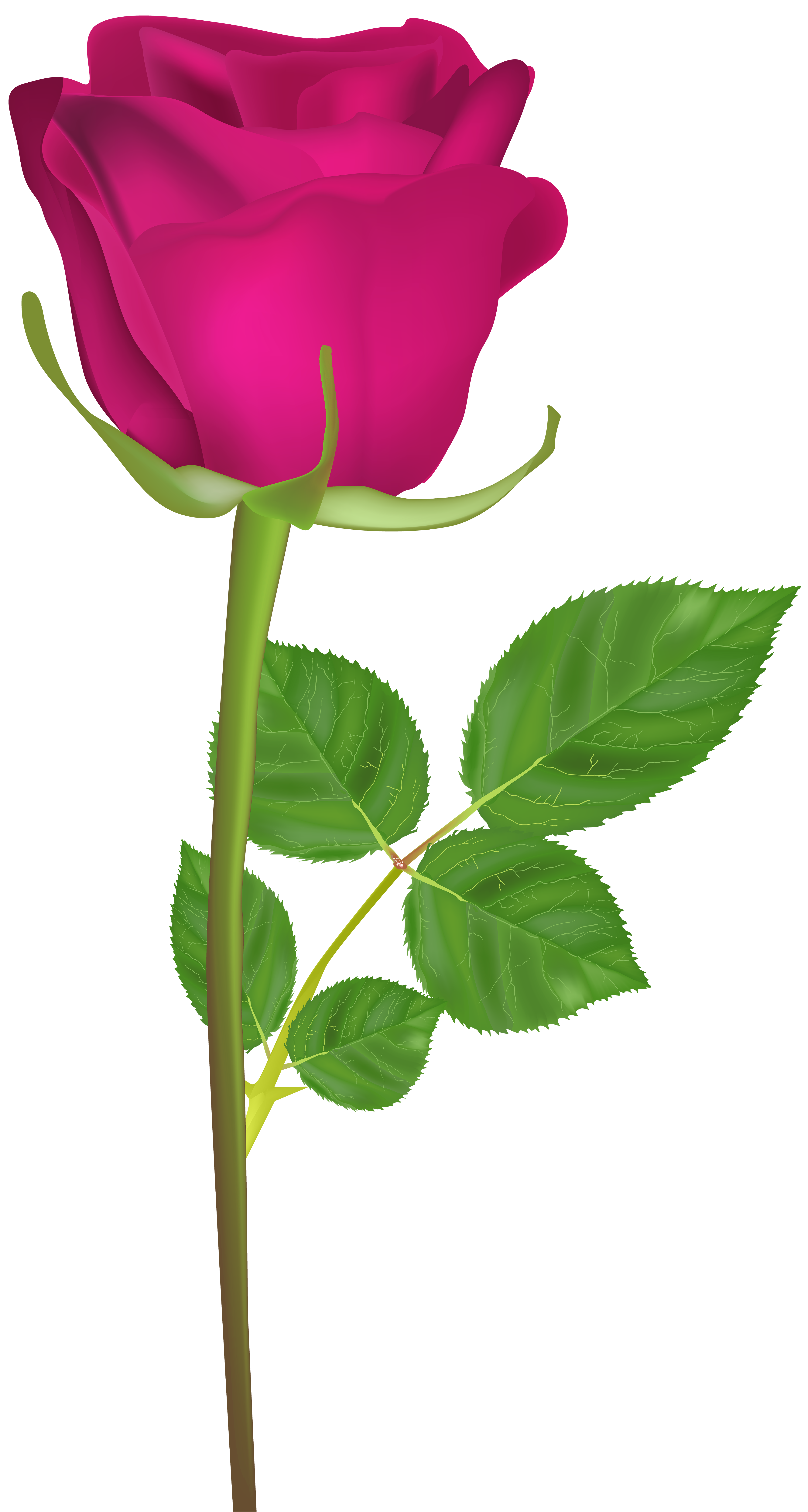 svg free stock Rose with pink png. Stem clipart.