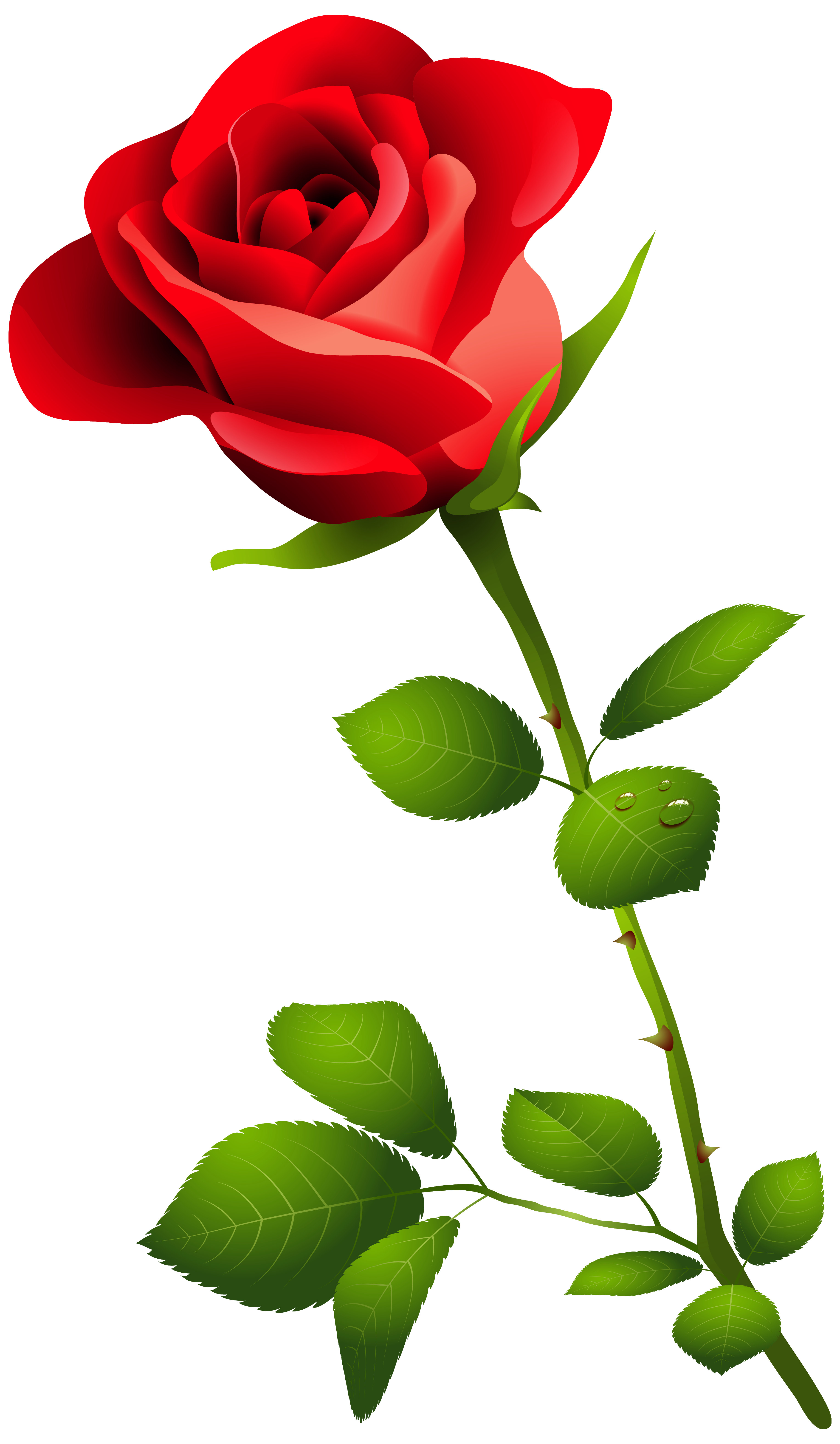 png library Red Rose with Stem PNG Clipart Image