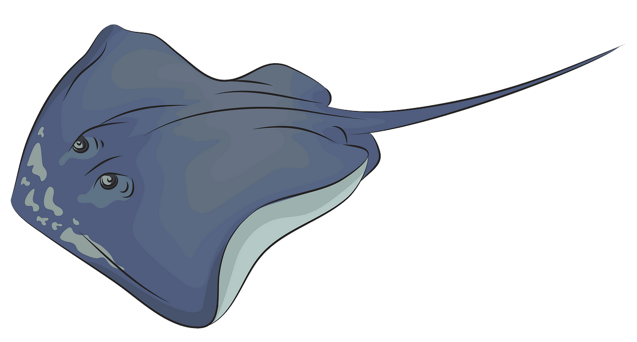 royalty free library Stingray clipart. Southern free download creazilla