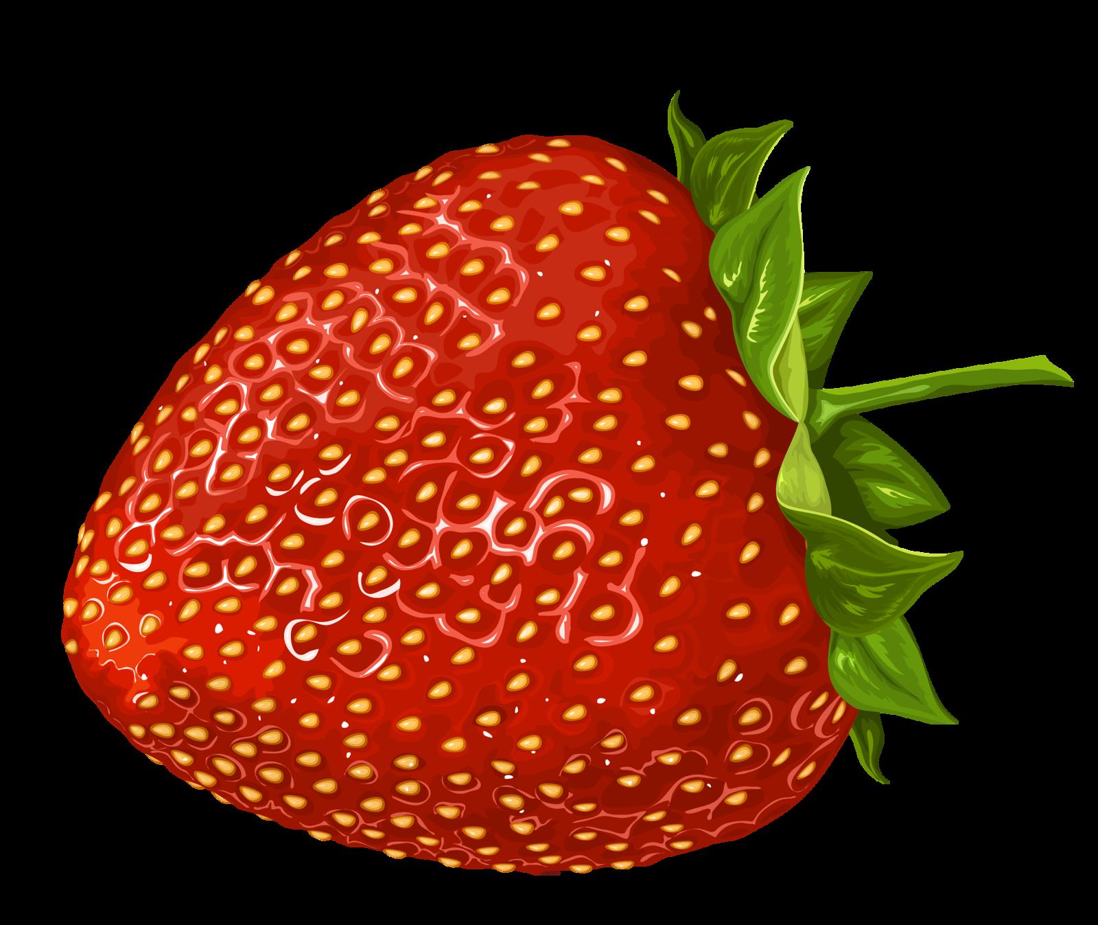 graphic transparent stock Drawing strawberries pencil. Cajoline vi fraises cu