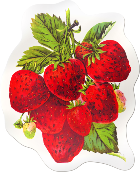 clip art freeuse library Strawberries Sticker