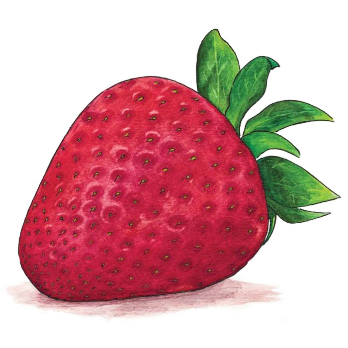 svg royalty free stock Richard lewis experience designer. Drawing strawberries watercolor