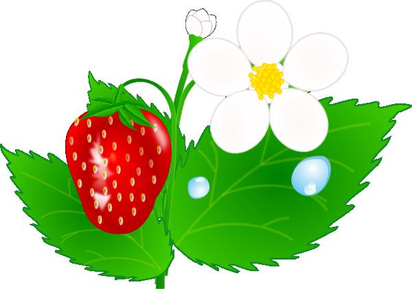 clip transparent stock Strawberry Flower Jh Clip Art at Clker