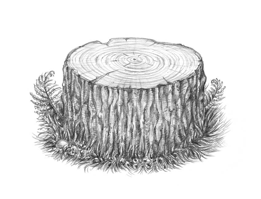 clipart transparent download Stump drawing. At paintingvalley com explore