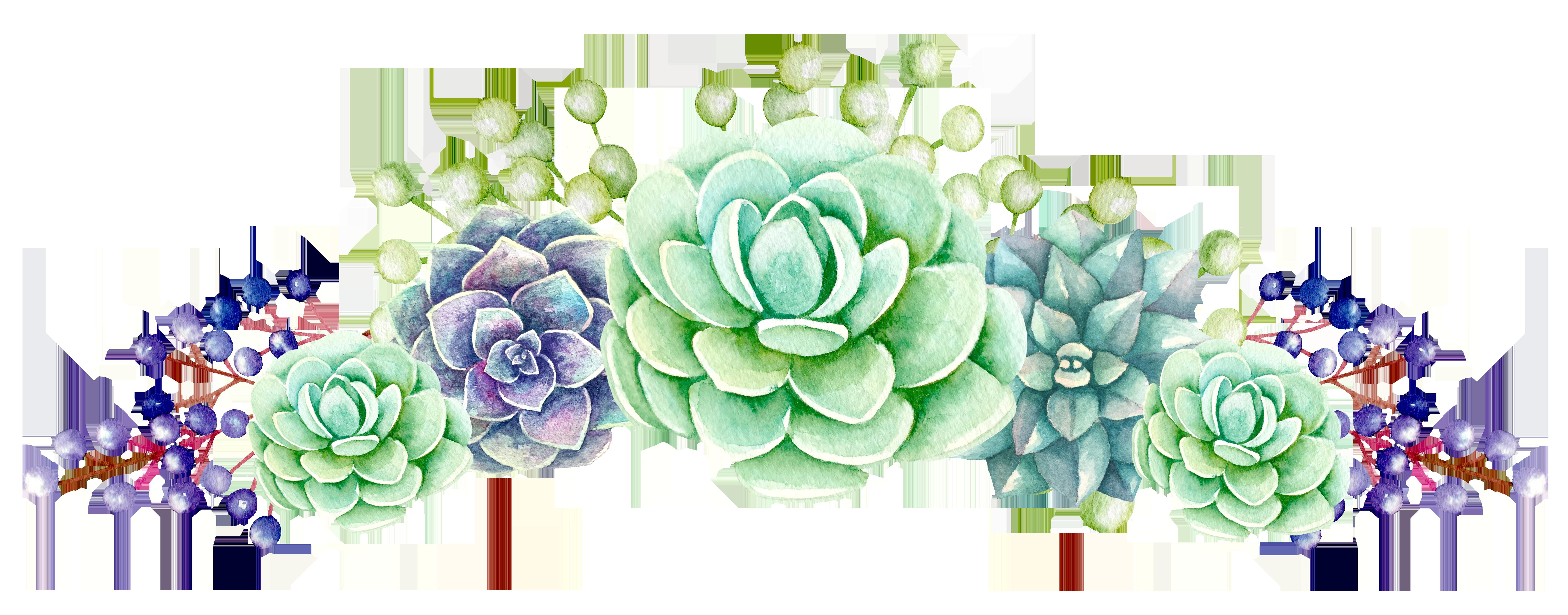 png transparent Succulent clipart. Flower tea production in