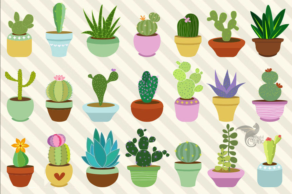 vector transparent library Cactus and by digital. Succulent clipart.