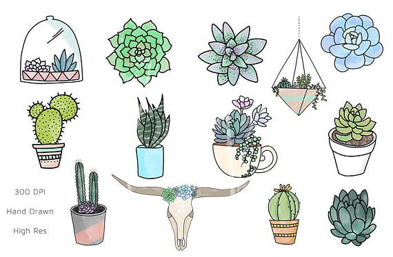 png royalty free library Succulent clipart. Png succulents .