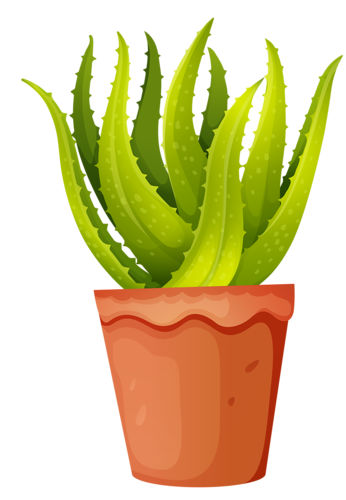 clip art library stock aloe Vera plant