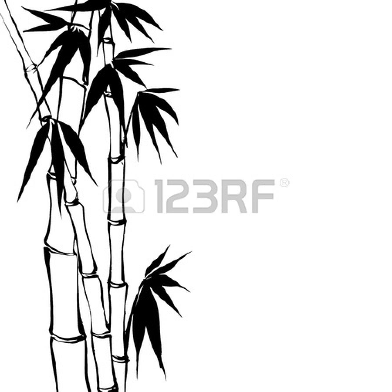 vector transparent library Sugarcane Drawing