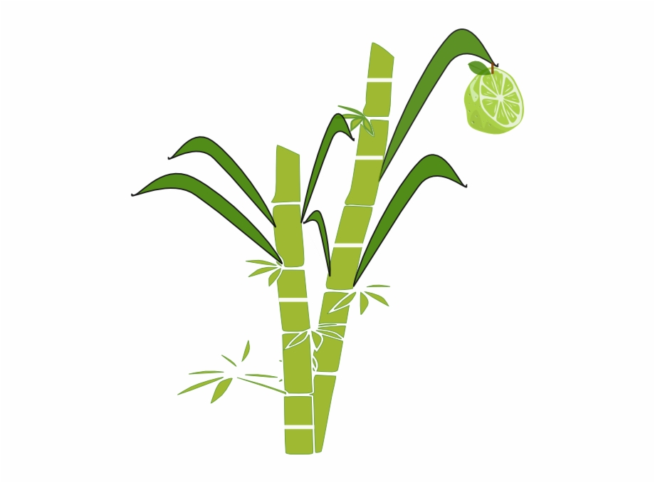 image black and white library Jpg Transparent Stock Collection Of Sugar Cane Clipart