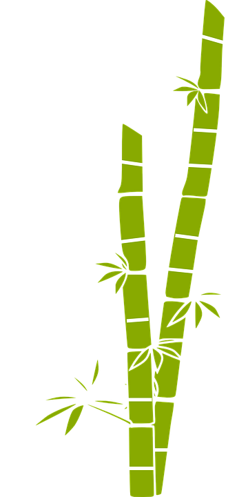 banner freeuse library Collection of free Baboo clipart single sugarcane plant