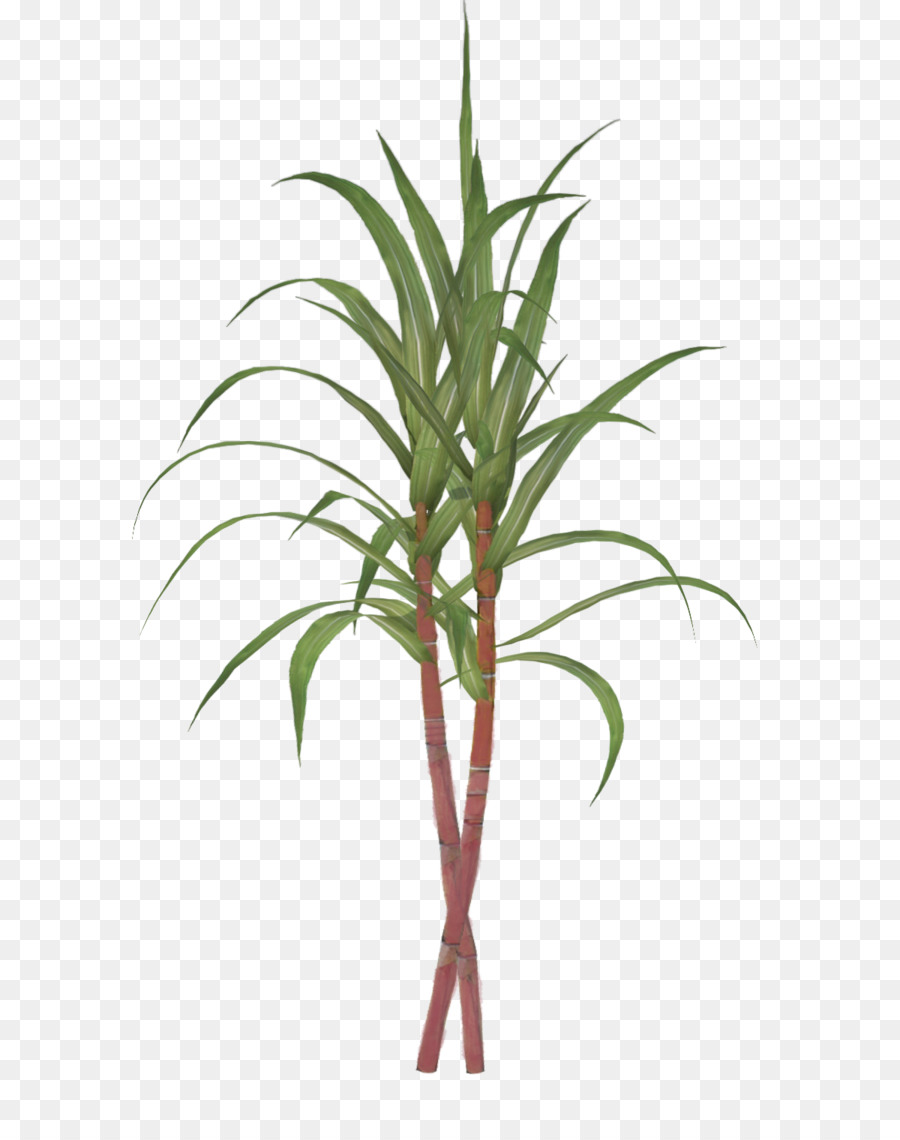 image free Palm Tree Drawing clipart