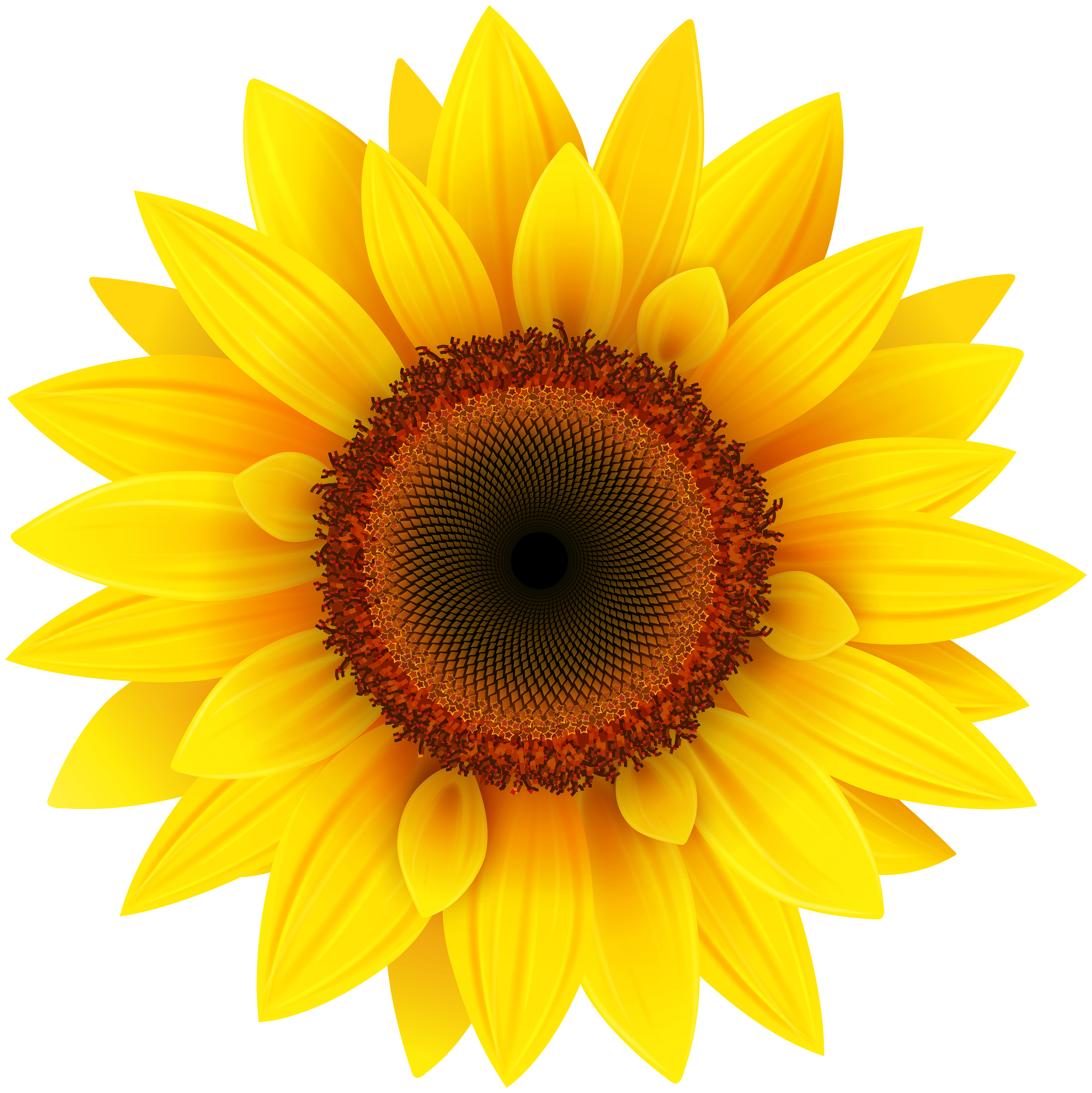 clipart free library Sunflower PNG Clipart Picture