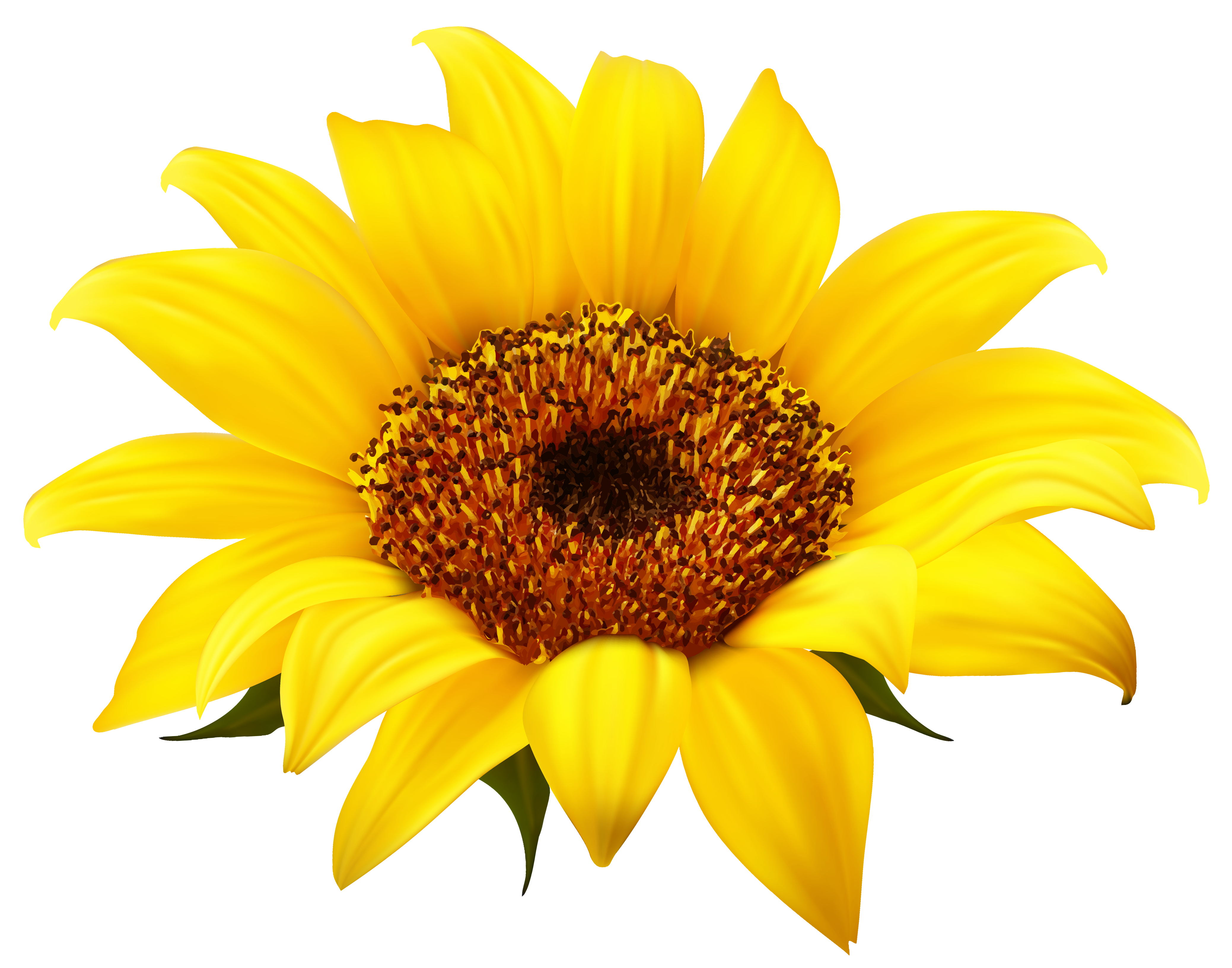 royalty free stock Sunflowers clipart rose. Sunflower png image gallery