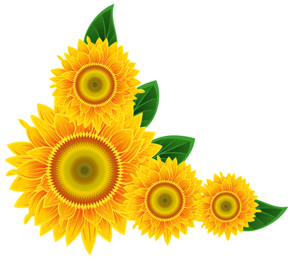 clipart freeuse stock Sunflower Corner Decoration PNG Clipart Image