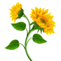 picture free Sunflowers clipart swag. Download sunflower free png.