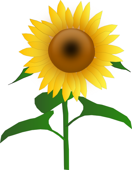 clipart library Sunflower clipart png