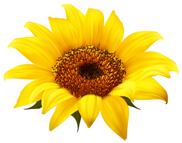 royalty free library Sunflowers clipart wedding. Sunflower png image sz