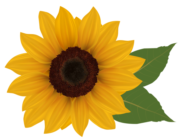 image Png picture crafts class. Sunflower corner border clipart