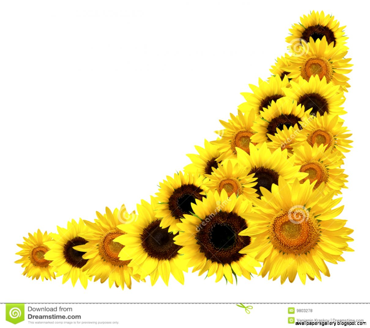 graphic freeuse Wallpapers gallery . Sunflower corner border clipart