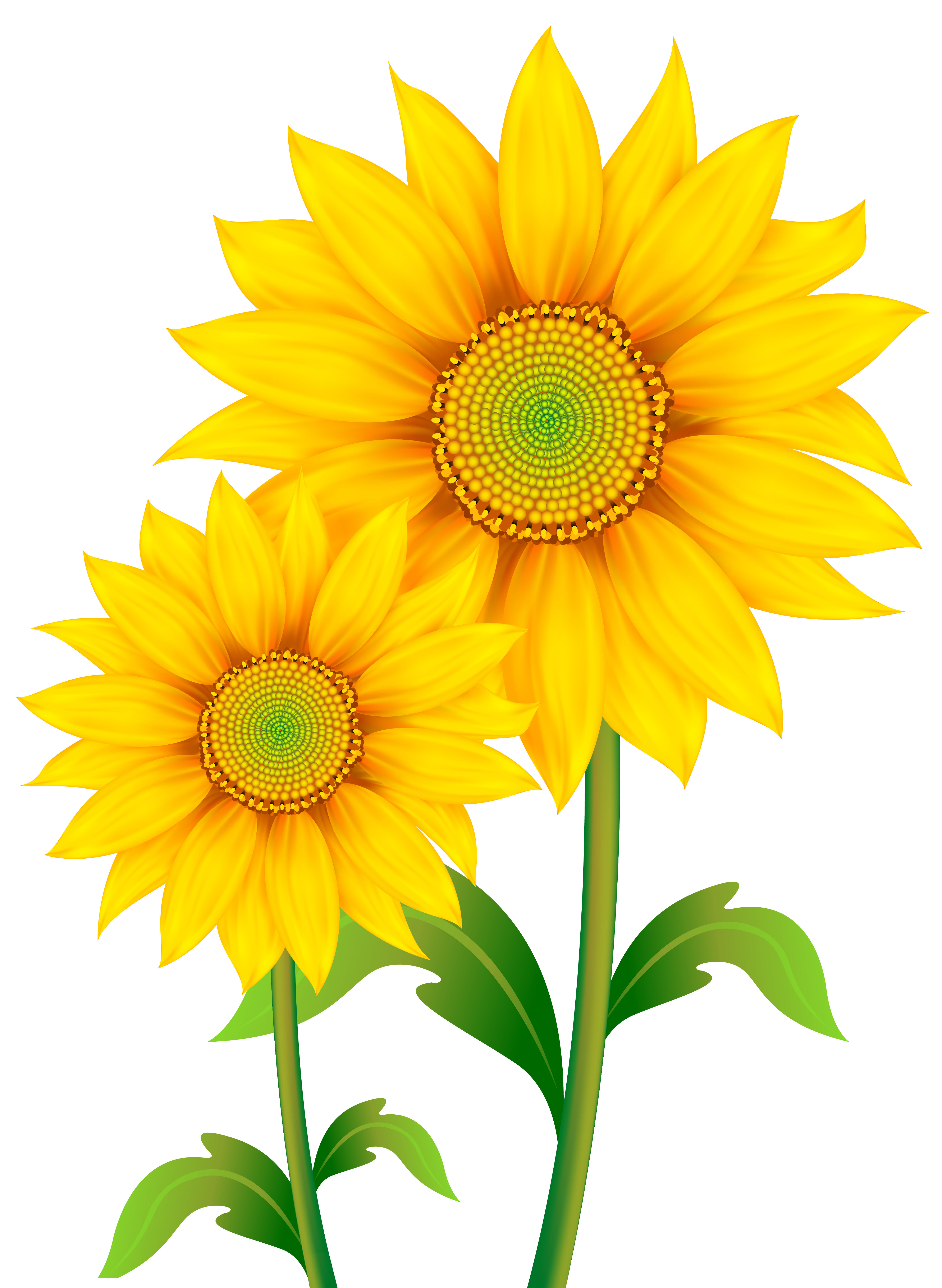 picture black and white download Transparent png image gallery. Sunflowers clipart.
