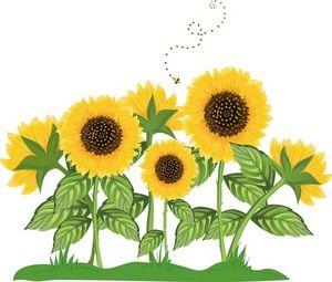 clip transparent download Sunflower border clip art. Sunflowers clipart.
