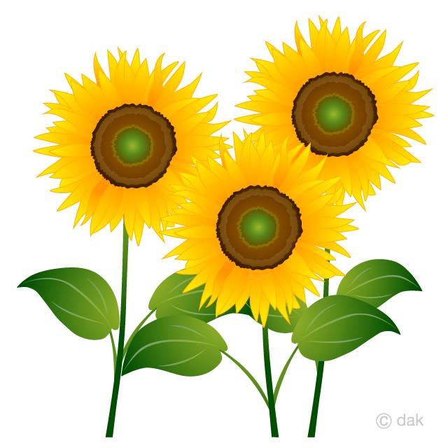 svg stock Sunflowers clipart. Three free picture illustoon.